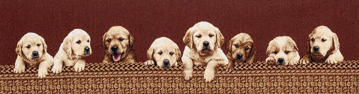 Labrador cuccioli